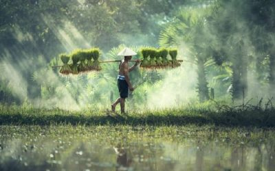 Quand partir au Vietnam : à chaque région, un bon moment pour voyager