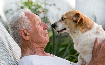 Les chiens conseillés aux soixantenaires